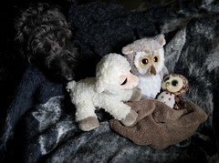 Benni inspects baby Swoop (Bennilover) Tags: toys dogs benni labradoodle owl hazel lamb liam baby swoop watching birth unexpected 52weeksfordogs