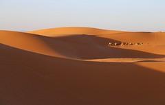 La Traversée (Alex L'aventurier,) Tags: maroc morocco merzouga desert désert sand sable dunes light shadow ombre sky ciel ergchebbi camels chameaux man homme person animals