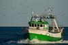 Llegando a puerto bien acompañado (dnieper) Tags: barcopesquero llegandoapuerto gaviotas puntadelmoral huelva spain españa