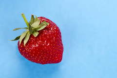 Close up of a strawberry (Schnapps2012) Tags: healthy tasty fruit juicy vibrant raw organic refreshment fresh strawberry shiny berry beautiful sweet closeup delicious food ripe seeds dessert red vitamin nutrient health one appetizing macro perfect bluebackground copyspace