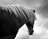 Los Reyes Abrams (Elvis) (Jessica Cardelucci) Tags: point reyes black white photograph art print seashore national park california horse equine portrait morgan