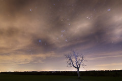 Orion_Taureau_Pleaides (frankastro) Tags: constellation orion taureau pleiades astronomy astronomie astrophotography