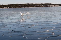 _D509335.jpg (larssteenberg) Tags: nynäshamn vinter stockholm natur utomhus