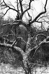 Trees (Król Paweł) Tags: blackwhite minolta japoneselens sony 100400 czarnobiałe