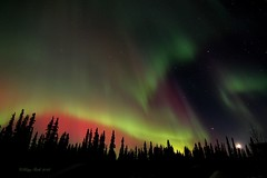 Colors Like I've Never Seen (Katy on the Tundra) Tags: northernlights auroraborealis nightsky