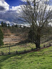 Park With Cell Phone (michele33) Tags: tree park sammamish fence grass maple branches landscape