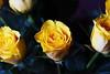 DSC_8998 (PeaTJay) Tags: nikond750 sigma reading lowerearley berkshire macro micro closeups gardens indoors nature flora fauna plants flowers bouquet rose roses rosebuds