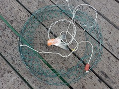 Fish Tail as Crab Bait (mikecogh) Tags: semaphore crabbing net fish tail bait spots rain jetty
