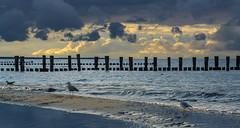 Ostsee  (29) (berndtolksdorf1) Tags: deutschland mecklenburgvorpommern ostsee strand möven himmel wasser meer clouds wolken outdoor