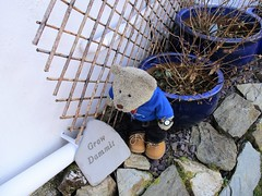 Grow dammit (pefkosmad) Tags: tedricstudmuffin teddy ted bear cute cuddly animal toy stuffed soft plush fluffy holiday week holibob cottage cornwall bodmin cardinham westcountry westsidecottage daysout trips touring tourist tourism adventures sign garden