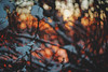 #188 - Winter abstract #6 / Abstraktní zima #6 (photo.by.DK) Tags: winter wintersunset wintermood winterabstract winterabstraction bokeh bokehlicious beyondbokeh bokehful oldlens legacylens manuallens manualfocus manual manualondigital vintage vintagelens germanlens czj czjpancolar pancolar pancolarauto5018mc pancolar50 pancolarauto pancolarauto50 pancolar5018 carlzeiss zeiss lens carlzeisspancolar carlzeissjena carlzeissjenapancolar sonya7 sonyilce sony sonyalpha sonya7ii shotwideopen wideopen wideopenbokeh artbydk photobydk