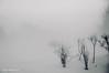 Tout simplement ... ( P-A) Tags: simplebeau pure combinaison brouillard hiverphotos simpa© brumeetbrouillard