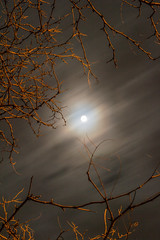 (ChabelaFoto) Tags: quebec montreal rural pleinlune lune moon fullmoon arbre tree branche branch soir nuit night mist brume sky