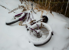 Covered (13skies) Tags: snow cold fence bike covered winter wishing hope riding pause
