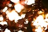 Magic Maple (Sa&Manu) Tags: maple primavera
