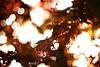 Magic Maple (Sa&Manu) Tags: maple primavera nikon12ais 12 ais vintage bokeh