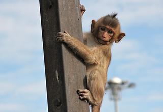 monkeyspot