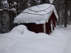 The Shed (jondewi52) Tags: colours colour forest jämtland landscape lapland nature norrland outdoor outdoors snow trees tree winter woods shed