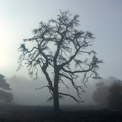 Scary Tree (Pieter ( PPoot )) Tags: mist tree scary