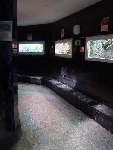 Террариум в Калининградском зоопарке ©  ayampolsky