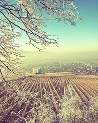 Cold (DrQ_Emilian) Tags: cold frozen white winter season lanscape view hills vineyards nature light colors details fog foggy branches frame outdoors town countryside rural travel visit explore wanderlust stetten kernen remstal remsmurrkreis badenwürttemberg germany europe yburg photography hobby