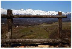 Quadretto (Alfoja) Tags: visitpiedmont visitpiedmontitaly piemonte piedmont gattinara vino vigna alfoja lucianofoglia foglia biellese biella montagna mountains alpi alps