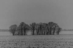 Paysage_hiver (Fátima Sánchez P.) Tags: nb bw arbres trees árboles nieve snow neige enneigé nevado paysage hiver