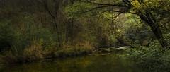 Unseasonable (keith_shuley) Tags: spring green dawn bullcreek austin texas texashillcountry stream creek