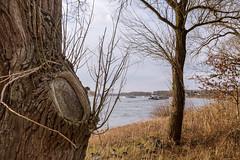 Monheim am Rheinufer II (KL57Foto) Tags: 2018 baumberg fluss germany gewässer jahreszeitenundwetter kl57foto landschaften march monheimbaumberg märz nrw natur nordrheinwestfalen olympus penemp2 rhein rhine river winter monheim am rheinufer