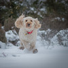 Flying through the snow ! (DP the snapper) Tags: turboflying cockapoo riflerange turbo snow
