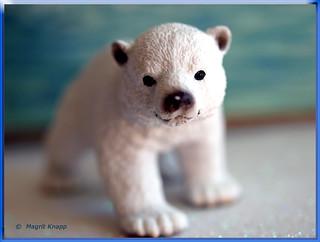 Der kleine Eisbär, er sieht aus wie Knud aus dem Berliner Zoo!!