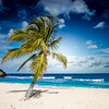 Creative Commons Palm Tree on a beach Antigua, Caribbean (goTraveltipster) Tags: caribbean beach palmtree ocean sky classic warm sunny sand