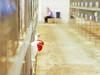 Prisoner Cell Block H (Kaptain Kobold) Tags: kaptainkobold sydney royal easter show australia poultry livestock fowl chicken chook bird farm agriculture head red white cage