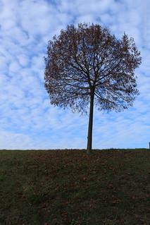 2011-11-20T12:33:02 - Partage Image