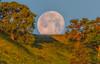 (Marc Crumpler (Ilikethenight)) Tags: landscape usa california bayarea sfbayarea eastbay contracostacounty antioch contraloma marccrumpler eastbayregionalparkdistrict ebparksok ebrpd moonset sunrise moon hills hiking trees canon canon7dmarkii 7dmarkii tamron150600mmf563