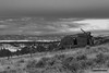 Quietus Shambles (kevin-palmer) Tags: custernationalforest montana march spring evening nikond750 nikon180mmf28 telephoto clouds old homestead abandoned house home cabin quietus snow fence backandwhite monochrome