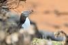 Sneezing Yellow Eyed Penguin (adbecks) Tags: yellow eyed penguin humor wildlife photography birds nz new zealand