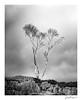 Holme fell silver birch (jholls84) Tags: holme fell cumbria langdales mono monochrome birch tree