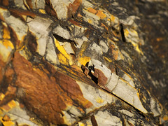 slate (michaelmueller410) Tags: slate schiefer ablagerungen farben gefärbt colored coloured colorful colourful bunt harz oberharz südharz osterode stein steine wand sonne felsen yellow brown black gelb braun schwarz