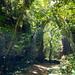 信仰が息づく神秘の森 (Mysterious forest where faith grows)