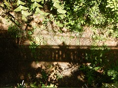094/365: hanging out in the trees (Michiko.Fujii) Tags: macritchie macritchietreetopwalk alongwaydown vertigo shadowdownthere shadows shadowsandlight suspension suspense