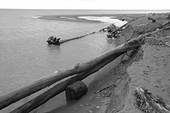 Shoreline Settlers (peterkelly) Tags: bw digital canon 6d wheatley ontario canada northamerica greatlakes lakeerie water driftwood tree log sand beach shoreline shore bluff horizon