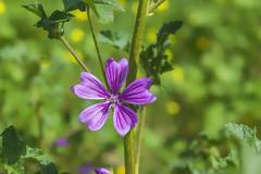 Pequeña flor (ninestad) Tags: