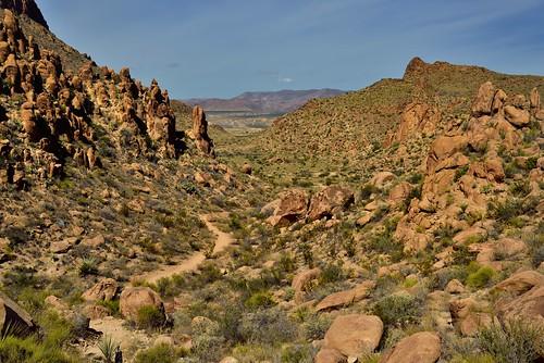 Oranges, Greens Browns of a Desert Landscape (Big Bend National Park)
