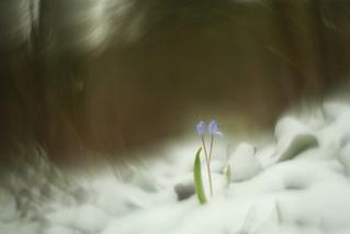 Quand l'hiver rencontre le printemps