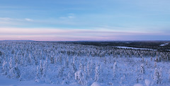 Lappland - Laponie (Mathieu Pierre) Tags: lights lapland canon 7dmark2 7dmarkii sigma14mmf18 sunset trees winter nature frost arctic hill finland nuit night sky snowytrees paysage ciel