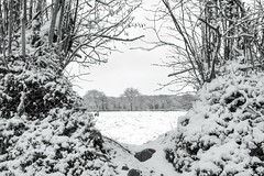 Through a snowy window (Dom Haughton) Tags: window atravesde winter trees tree scorrier cornwall kernow snow landscapephotography landscape outdoor britain blackwhite blackandwhite blancoynegro bw pretoebranco greatbritain uk unitywood
