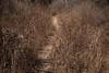 Querétaro -3395180303 (Jacobo Zanella) Tags: queretaro mexico 2018 sendero camino senda path line hidden mysterious rural land rough jacobozanella jz76