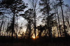 Trees At Dark. (dccradio) Tags: lumberton nc northcarolina robesoncounty outside outdoors evening lateafternoon dusk sky bluesky colorfulsky eveningsky tree trees treelimbs treebranches woods wooded forest backyard branches branch sticks nature natural nikon d40 dslr sunset settingsun