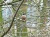 Untitled (Nooki90) Tags: vogel bird brown brownbird braunervogel